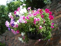 Sponsor a hanging basket for just £90